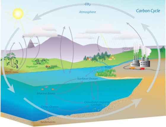 Source: NOAA Earth System Research Laboratory Carbon Cycle